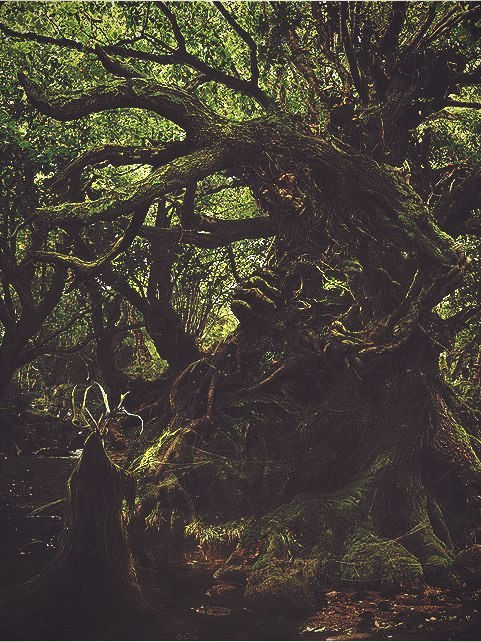 Elven Girl Wallpaper Magic Forest On Tumblr