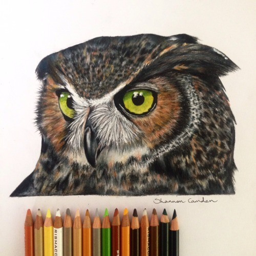Baby Pen Animal Owl Drawing On Tumblr