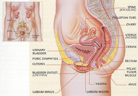 natural cure prolapsed uterus