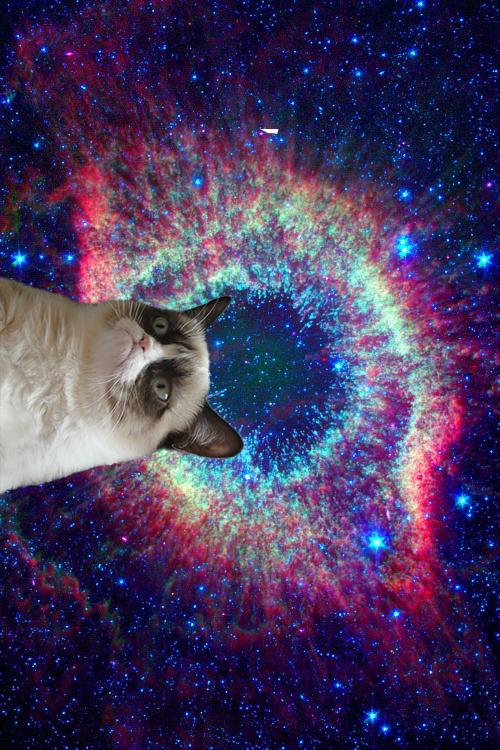 Cute Wallpapers Of Grumpy Cat Fundo De Celular Tumblr