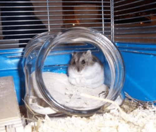 Bekvam Spice Rack Masterpost: Cheap Cages And Supplies For Hamsters... - How