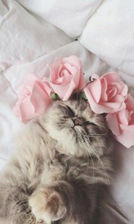 Cute Cat Images For Wallpaper Fondos De Gatos Tumblr