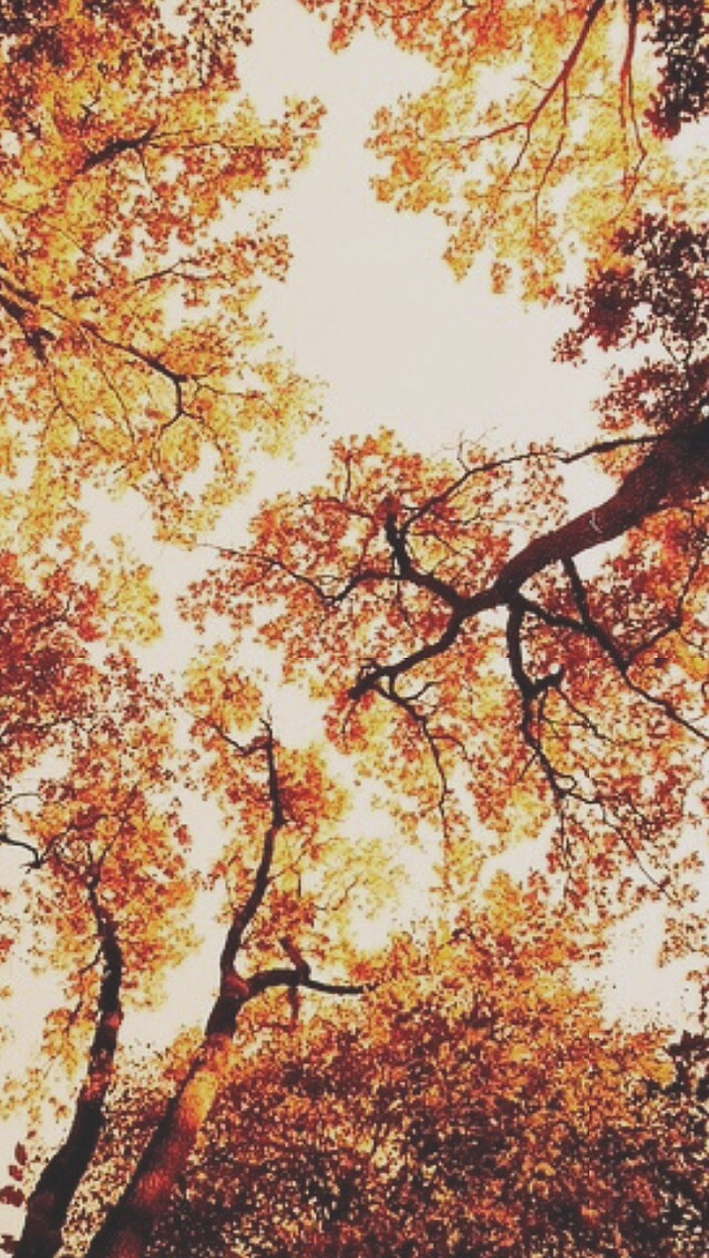Fall Heart Leaves Background Wallpaper