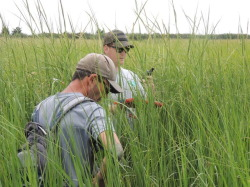 Blog post at Conserve Wildlife Foundation about our salt marsh monitoring work.