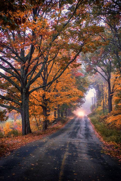 Fall Leaves Falling Wallpaper Country Road Tumblr