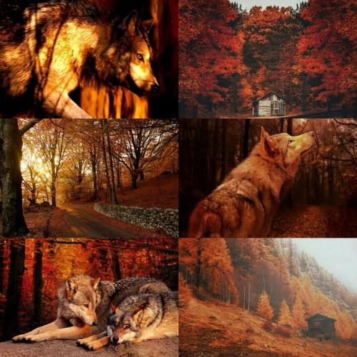 Fall Collage Wallpaper Aesthetic Orange Tumblr