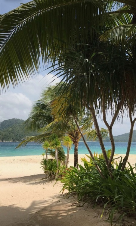 Girl Wallpaper Beach Palm Trees On Tumblr