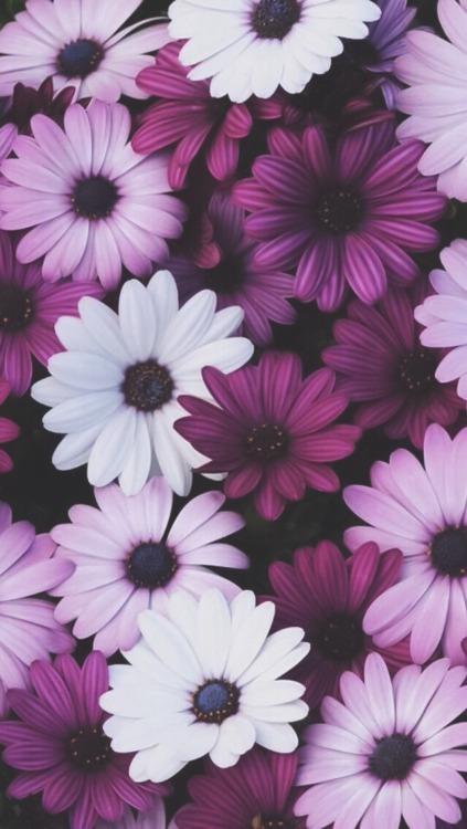Beautiful 3d Wallpaper Iphone 6 Floral Iphone Wallpaper Tumblr