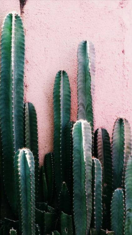 Positive Vibes Quotes Wallpaper Cactus Wallpaper Tumblr