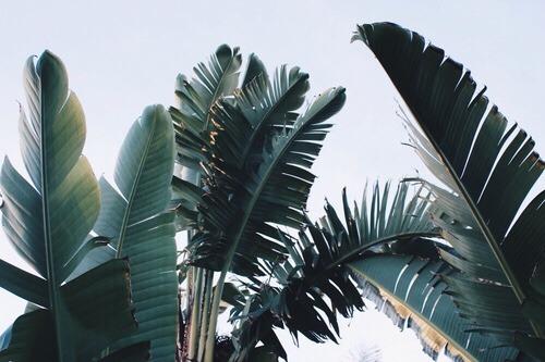 Live Wallpaper Fall Leaves Tropical Leaves Tumblr