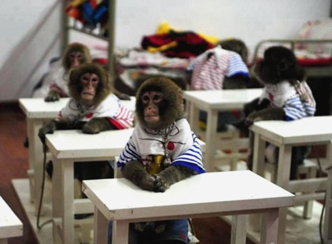 Cute Wallpapers Hands Quot Foreign Students Quot In China S First Monkey School Funzug Com