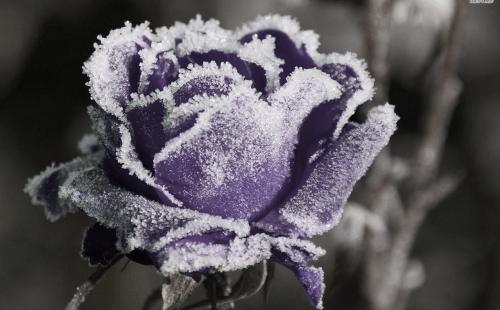 Pastel Goth Wallpaper Girl Pastel Lavender Aesthetic Tumblr