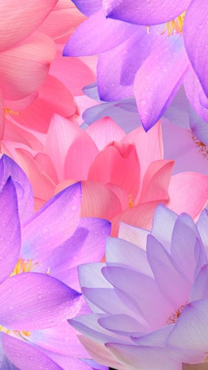 Dark Floral Iphone Wallpaper Lotus Flowers Wallpaper Tumblr