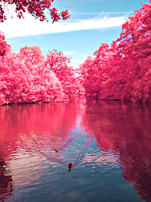 Girl Forest Wallpaper Pink Forest On Tumblr