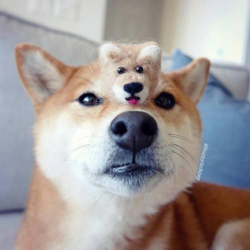 Medium Of Call Of Doge
