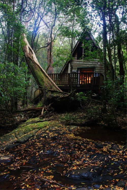 Fall Cabin The Woods Wallpaper Forest House On Tumblr