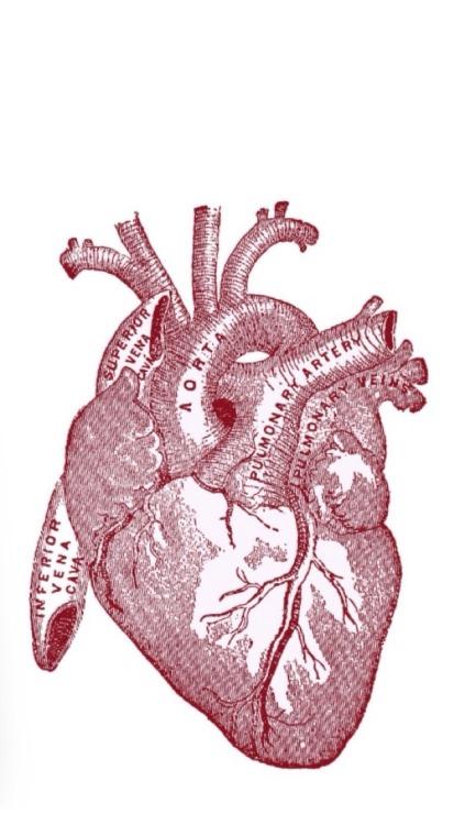 Vintage Flower Wallpaper Iphone Human Heart Drawing Tumblr