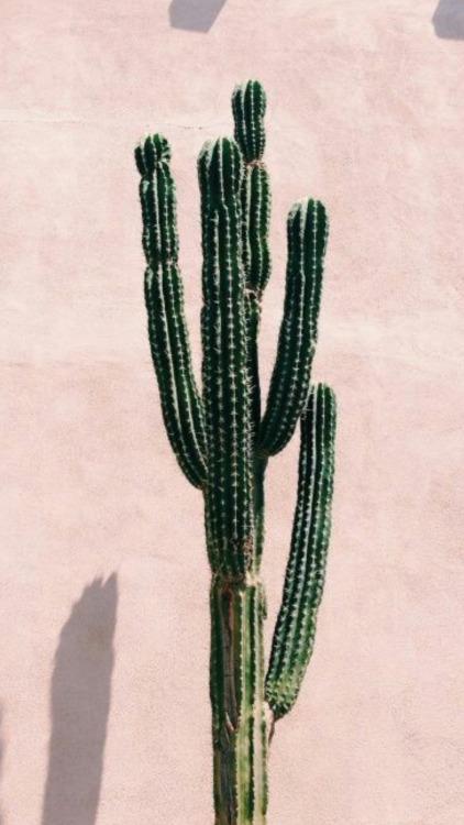 Watercolor Wallpaper Backgrounds Quote Cactus Wallpaper Tumblr