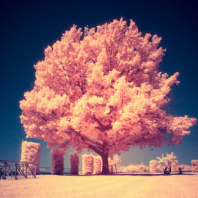 Sweet Cute Wallpapers Fotos Fofas On Tumblr