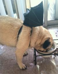 bat dog costume | Tumblr