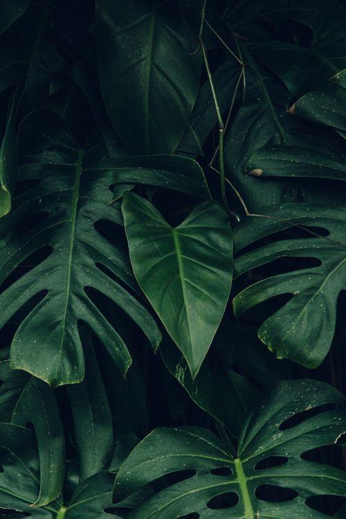 Fall Walk Wallpaper Forest Aesthetics Tumblr