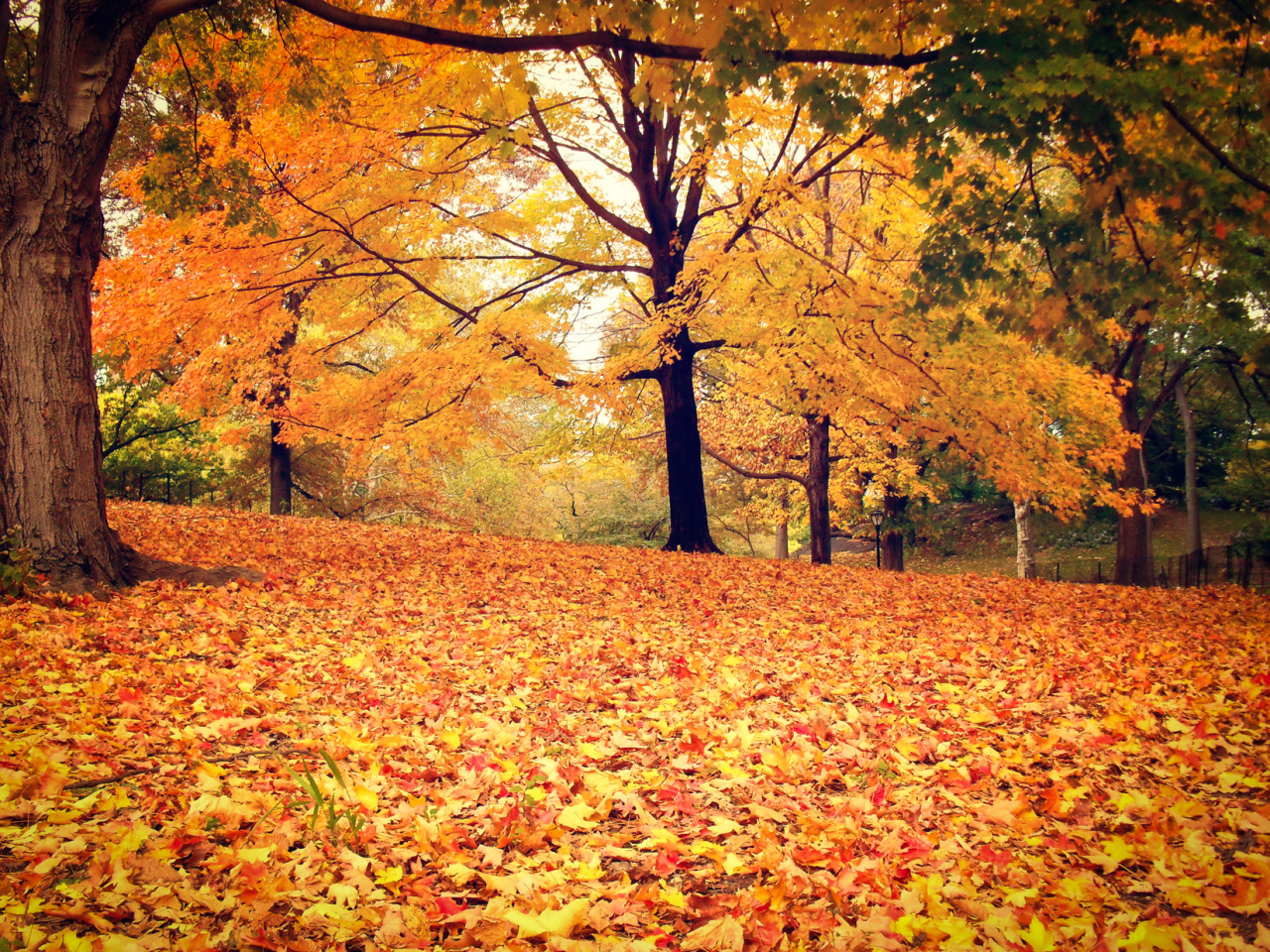 Fall Desktop Wallpaper With Crush Quotes Ny Through The Lens New York City Photography New York