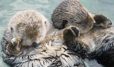 Cute Couple Holding Hand Wallpaper Sea Otters Holding Hands Tumblr