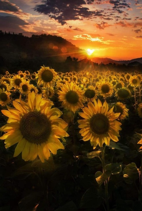 Ofwgkta Wallpaper Hd Sunflowers Aesthetic Tumblr