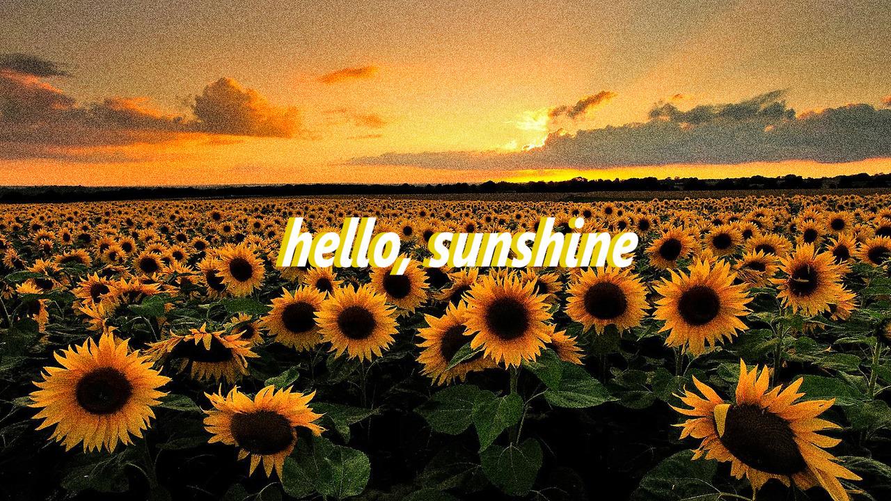 Sunflower Wallpaper With Quote Amazeballs