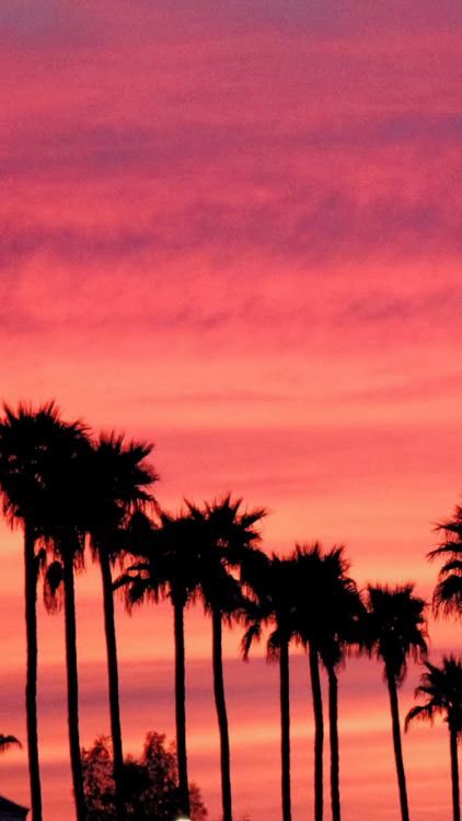 Palm Trees Quote Wallpaper California Lockscreens Tumblr