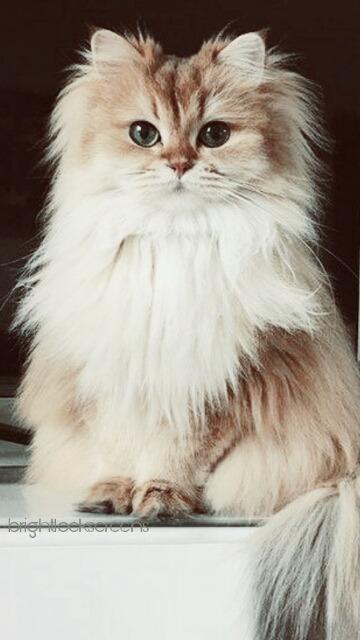 Pug Iphone Wallpaper Cats Lockscreens Tumblr