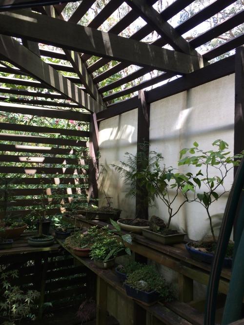 Cozy Fall Wallpaper Greenhouse Aesthetic Tumblr