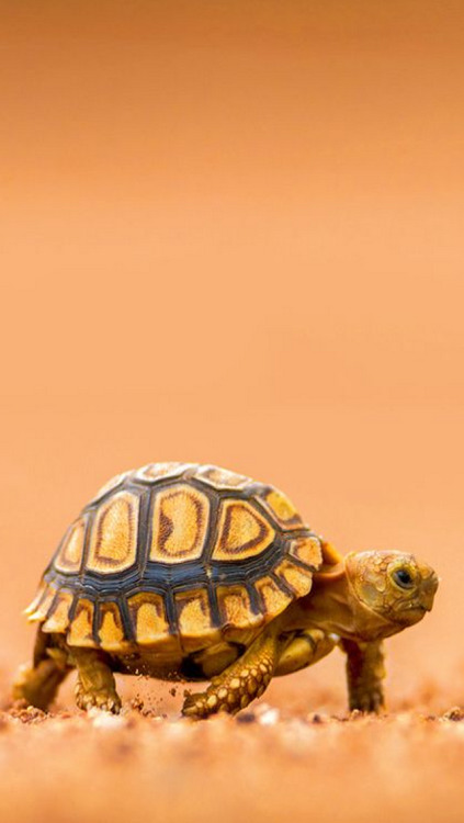 Cute Turtle Wallpaper For Iphone Turtles On Tumblr