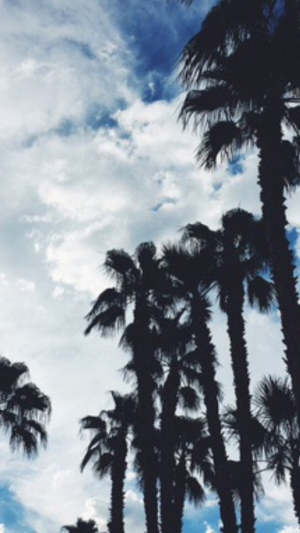 Cute Girly Life Wallpaper Palm Trees Iphone Wallpapers Tumblr