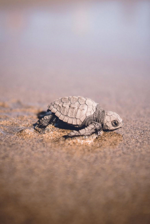Sea Turtle Iphone Wallpaper Beach Turtles Water Tumblr