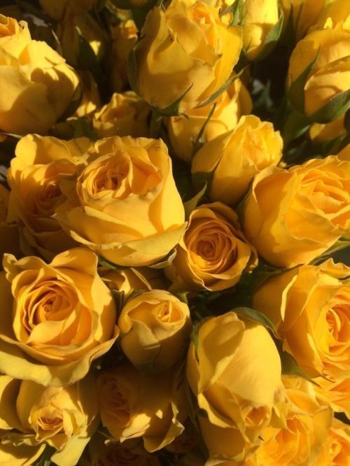 Iphone 6 Orange Flower Wallpaper Yellow Mood Board Tumblr