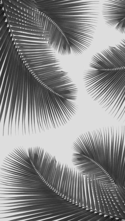 Floral Pattern Iphone Wallpaper Palm Leaf Wallpaper Tumblr