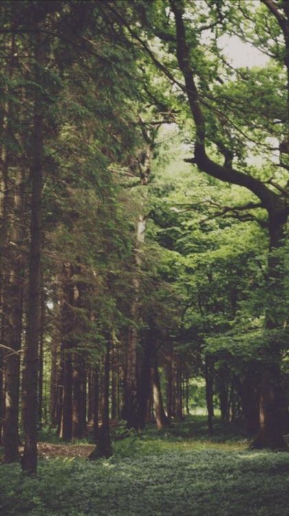 Iphone 6 Wallpaper Fall Leaves Forest Lockscreen Tumblr