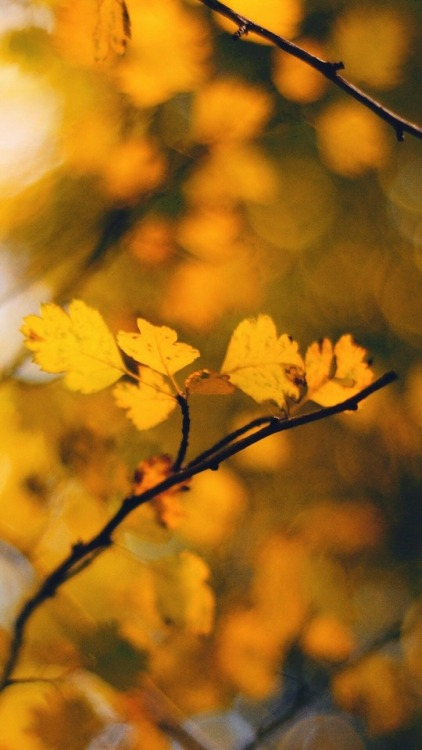 Iphone 6 Wallpaper Fall Leaves Girly Background Tumblr