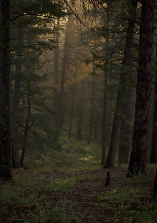 Gothic Fall Wallpaper Dark Forest On Tumblr