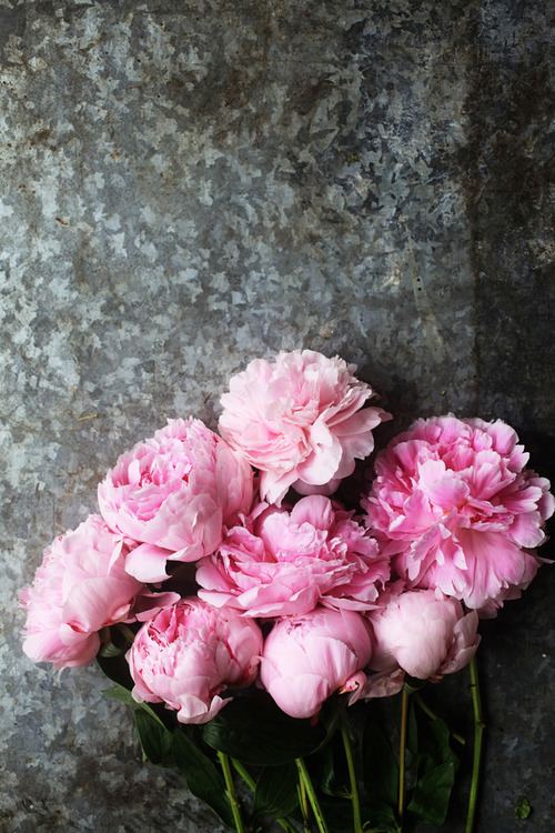 Peony Love Quote Wallpaper Pink Peonies On Tumblr
