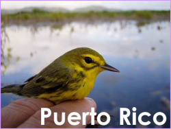 Puerto Rico. I studied migrant birds in mangroves for my graduate research.