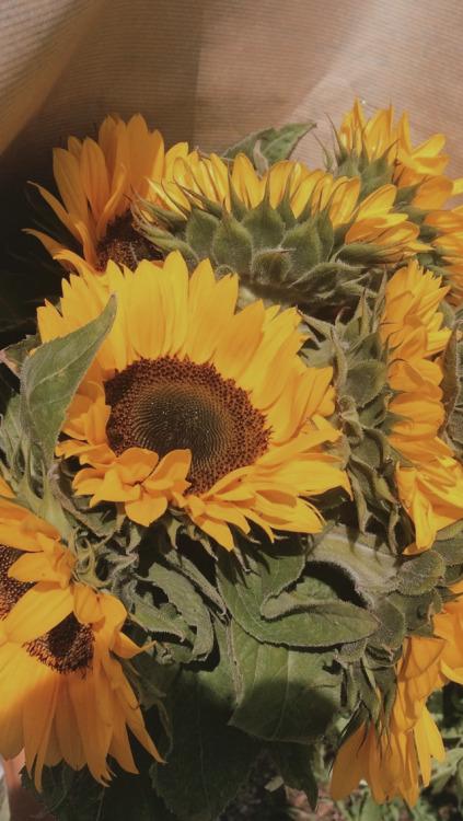 Iphone 5 Wallpaper Floral Sunflower Wallpaper Tumblr