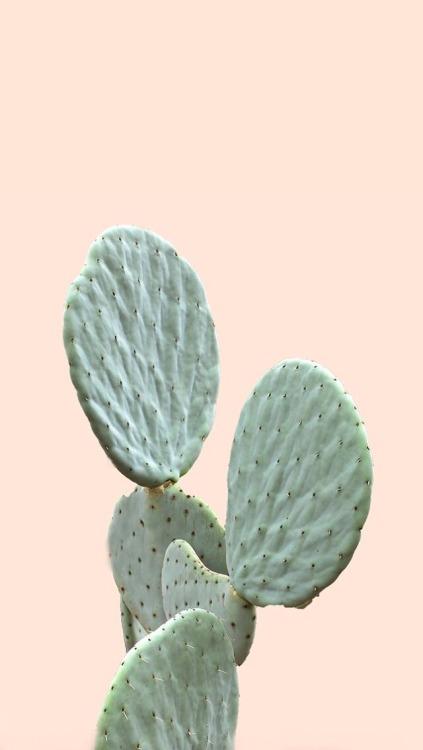 Inspirational Wallpaper Iphone 6 Cactus Wallpaper Tumblr