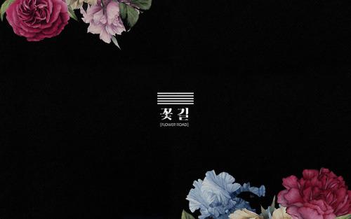 Poppy Wallpaper For Iphone Flower Wallpapers For Desktop Tumblr
