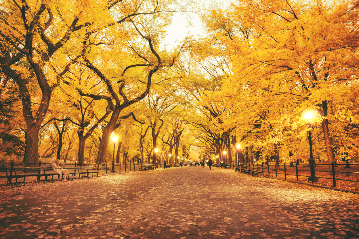Wallpaper Images Of Fall Trees Lined Lake Ny Through The Lens New York City Photography Top 12