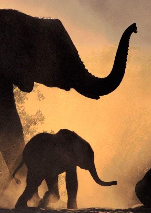 africa shape earrings