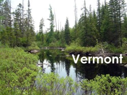 """Northeast Kingdom, Vermont – the """"warbler factory"""". I did bird surveys here. Imagine a forest saturated with breeding birds. This is it."""
