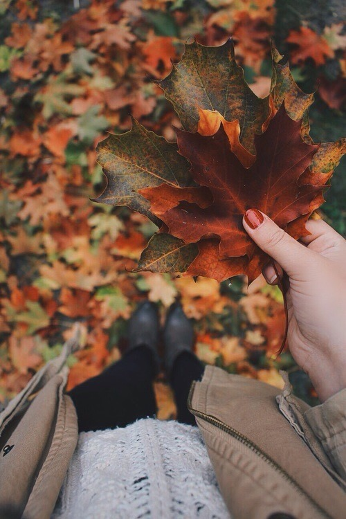 Falling Leaves Wallpaper For Iphone Autumn Leaves On Tumblr