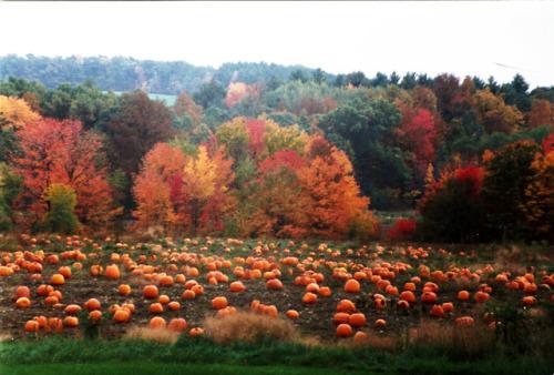 Fall Pumpkin Patch Wallpaper Pumpkin Patch Tumblr